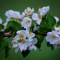 Весенние цветы :: Stasya♥♥ ♥♥Stasya