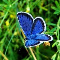 *Голубянка. :: vodonos241