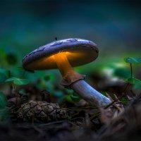 Волшебный гриб :: Алексей Строганов