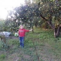 Мой сад, и внук :: ZNatasha -