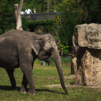 Слон :: Ахметзянова Лилия