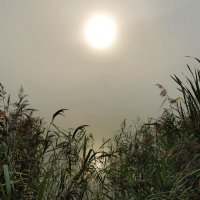 Туманом озеро одето :: sergej-smv