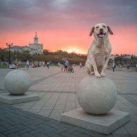 Девочка на шаре :: Алексей Яковлев