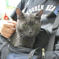 Умный кот. :: Зинаида
