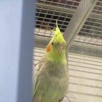 Попугай. :: Зинаида