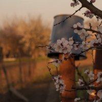 Весна :: Михаил Ананич