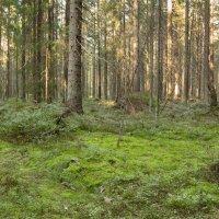 В летнем лесу :: Aнна Зарубина