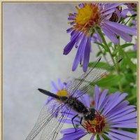 Цветы и стрекоза :: OLLES