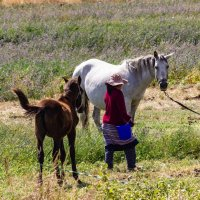 Фермерское хозяйство, которое накормит страну :: Oleg Sharafutdinov