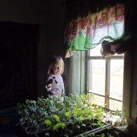 Бабушкина рассада :: Светлана Рябова-Шатунова