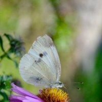 Бабочка :: Anna Koldings