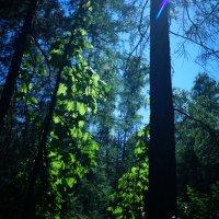 Волшебный лес полон чудес :: Елена Елена