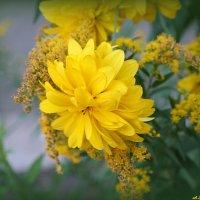 Не осень в нашей грусти виновата, а лишь в душе отсутствие весны.. :: Андрей Заломленков
