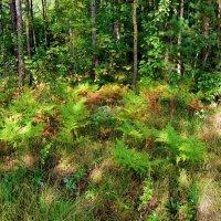 В лесу :: Алёна Сапунова