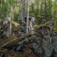 Лесными дорогами :: Владимир Колесников