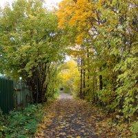 Осенний коридор :: Татьяна Георгиевна