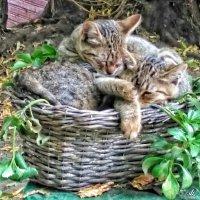 дружно в садике живём :: Сергей Беличев