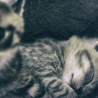Сладкий сон под охраной :: Елена Иванова