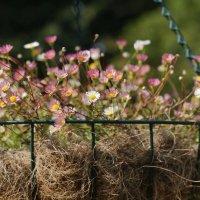 Цветочная корзинка в сентябре :: ZNatasha -