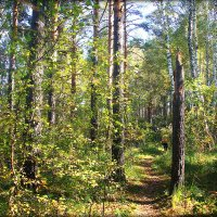 Утро осеннего леса.. :: Александр Шимохин