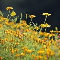 Цветы :: Валерий К.