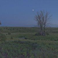 На печальные поляны льет печальный свет она... :: Senior Веселков Петр