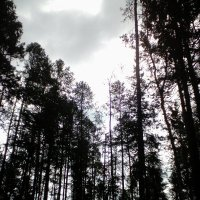 Тёмный лес :: Елена Елена