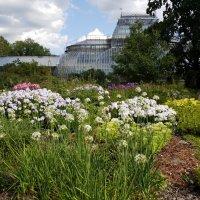 В мире цветов и растений. :: Жанна Викторовна