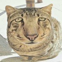 Шарж на кипрских котов :: Сергей Беличев