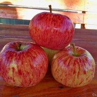 Дачные яблочки!!!(очень вкусные)!!! :: Олег Семенцов