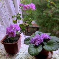 Цвет настроенья лиловый... :: Люба