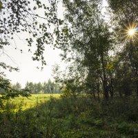 В лесу :: Нина Кутина