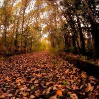 Осенняя дорога :: Владимир Куликов