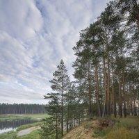 Озеро в лесу :: leo yagonen