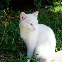Белая, белая ... :: Лариса Корж