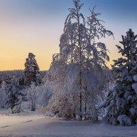 Полярная ночь :: Владимир Чикота