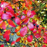 Осенняя листва :: Leonid Tabakov