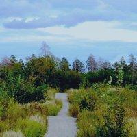 А дорожка в лес ведет :: Raduzka (Надежда Веркина)