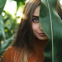 Царство кукурузы :: Каролина Савельева