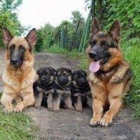 Большая семья... :: Сергей Ударник