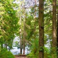 """""""Неразгаданная тайна - в чащах леса... И повсюду тишина - необычайна.  Верю сказке, верю чуду.. :: Ирэн"""