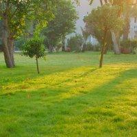 Травка зеленеет и солнышко блестит :: Владимир Владимирович