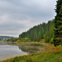 Старый пруд. :: Александр Зуев