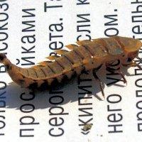 Ископаемое насекомое :: Николай Масляев