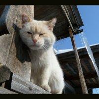 Кошки :: Юрий ГУКОВЪ