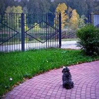 Осень за забором :: ВАЛЕРИЙ