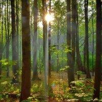Немного солнца в осеннем лесу :: Olcen Len