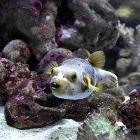 Рыба. :: Алексей .