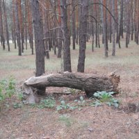 Нерукотворная лавка в лесу :: Галина