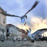 Проснуться в Венеции :: Denis Makarenko